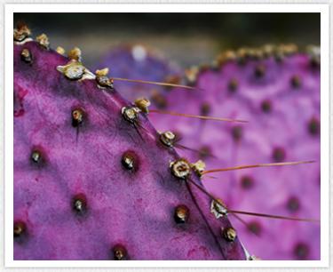 Parodontosetherapie - kaktus